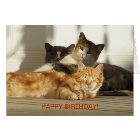 Tarjeta Tres gatos de relajación, cumpleaños