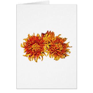 Tarjeta Tres momias anaranjadas de Pom Pom