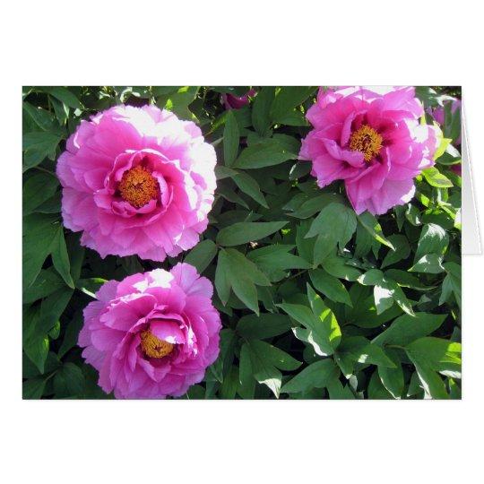 Tarjeta Tres Peonies rosados