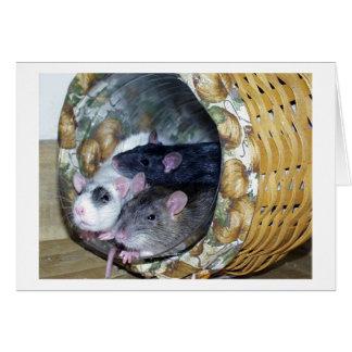 Tarjeta Tres ratas en una cesta