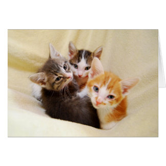 Tarjeta Trío de gatitos