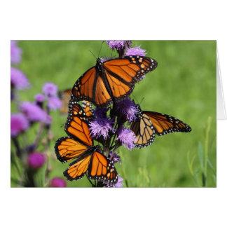 Tarjeta Trío del monarca