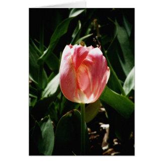 Tarjeta Tulipán de Sunkissed