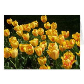 Tarjeta Tulipanes abigarrados amarillos y rojos