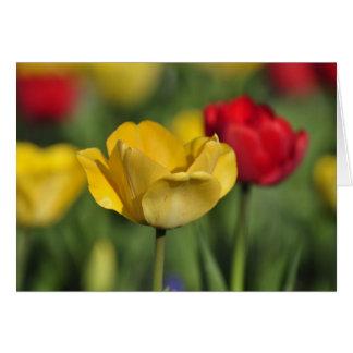 Tarjeta Tulipanes amarillos y rojos