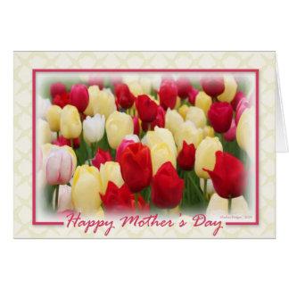 Tarjeta Tulipanes blancos amarillos rojos - frontera y