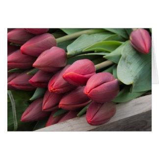 Tarjeta Tulipanes frescos de la primavera