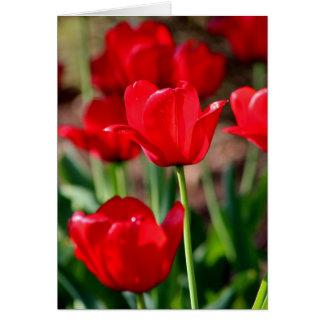 Tarjeta Tulipanes rojos adaptables