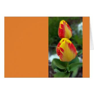 Tarjeta tulipanes rojos amarillos