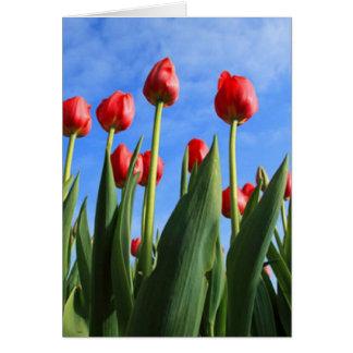 Tarjeta Tulipanes rojos en el cielo