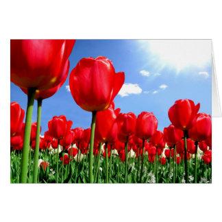 Tarjeta Tulipanes rojos en primavera