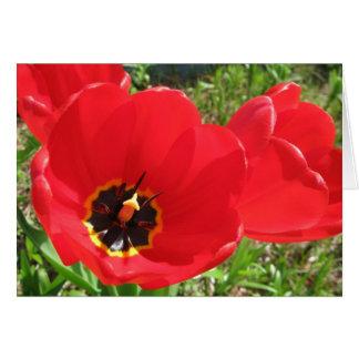 Tarjeta Tulipanes rojos rojos rojos