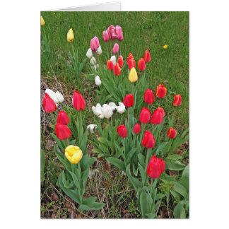 Tarjeta Tulipanes rojos, rosados, blancos, y amarillos -