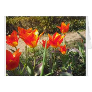 Tarjeta Tulipanes rojos y amarillos