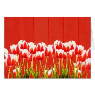 Tarjeta Tulipanes rojos y blancos