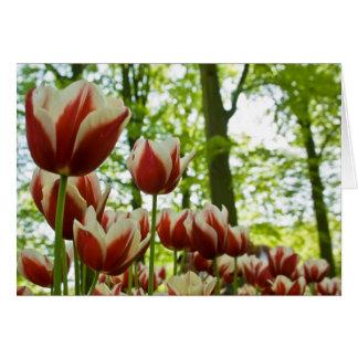 Tarjeta Tulipanes rojos y blancos DSC0869