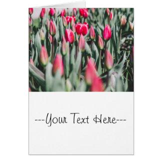 Tarjeta Tulipanes rojos y rosados, campo de flor en