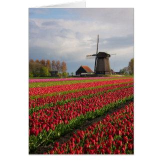 Tarjeta Tulipanes rojos y un molino de viento