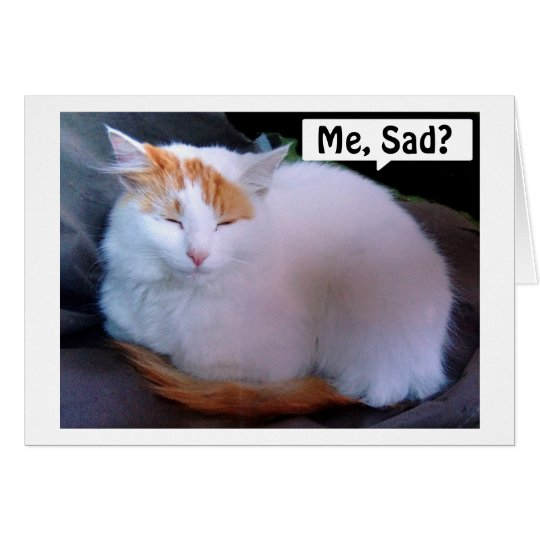 TARJETA TURKISH VAN CAT IS TAN TRISTE/QUE LE FALTA
