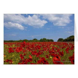 Tarjeta Un campo por completo de flores rojas