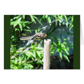 Tarjeta un notecard para el amante de la libélula