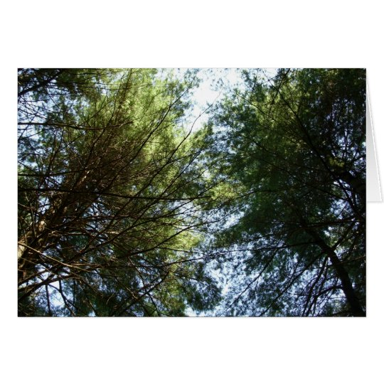 Tarjeta Una vista de los tops del árbol