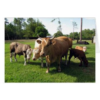 Tarjeta Vacas de la vida de la granja (6003) -
