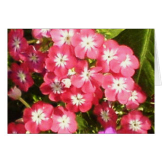 Tarjeta Valle de Badrinath de las flores 1