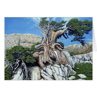 Tarjeta verde del árbol de la cala