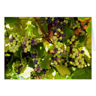 Tarjeta Vino creciente