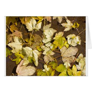 Tarjeta Vista superior de las hojas de arce mojadas de un