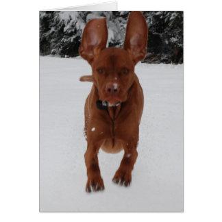 Tarjeta Vizsla - oídos grandes