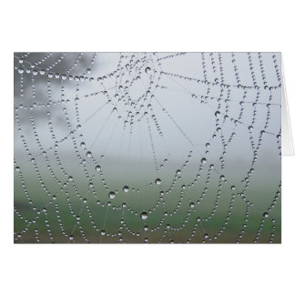 Tarjeta Web de araña del rocío de la mañana