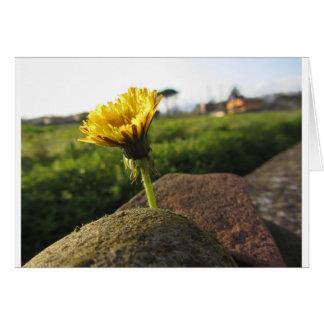 Tarjeta Wildflower amarillo que crece en piedras en la