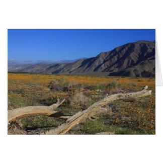 Tarjeta Wildflowers del desierto de Borrego Springs