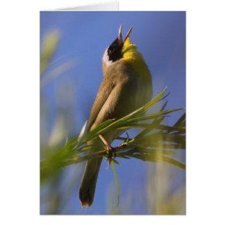 Tarjeta Yellowthroat común