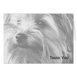 Tarjeta Yorkshire Terrier blanco y negro Yorkie