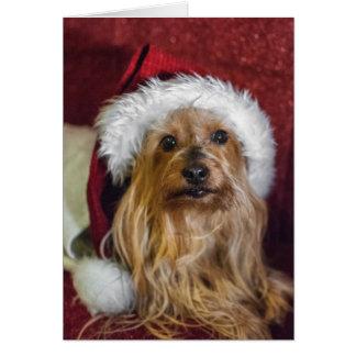 Tarjeta Yorkshire (yorkie)/tarjeta de Navidad de Terrier
