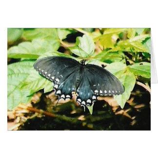 Tarjetas blancas negras de la foto de la mariposa