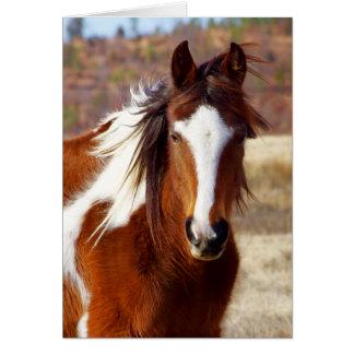 Tarjetas de cumpleaños hermosas del caballo de la