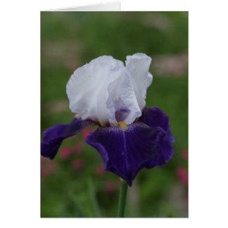 Tarjetas de cumpleaños religiosas -- Iris púrpura