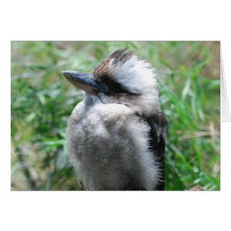 Tarjetas de felicitación de risa de Kookaburra