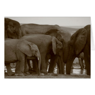 Tarjetas de felicitación del elefante para una