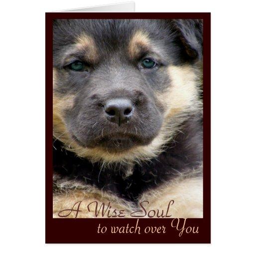 Tarjetas de la foto del perrito