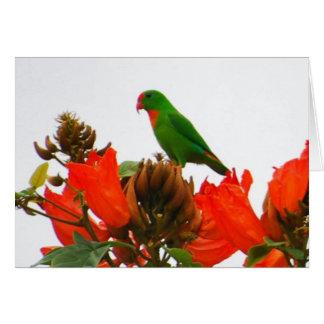 Tarjetas de nota con el loro exótico en las flores