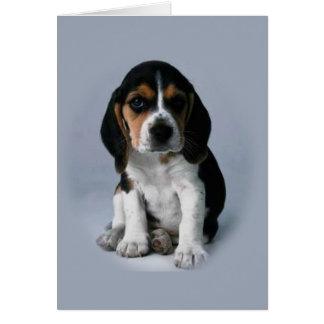 Tarjetas de nota del beagle