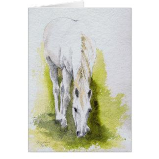 Tarjetas de nota del caballo blanco