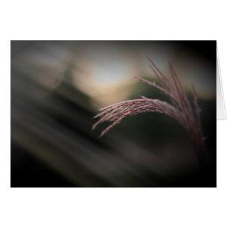 Tarjetas de nota ornamentales de la hierba