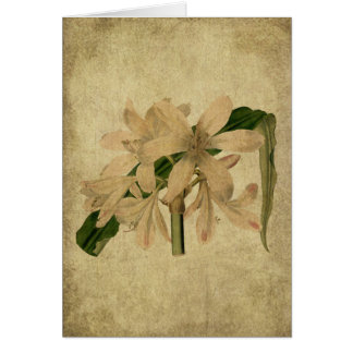 Tarjetas de nota remilgadas florales de Lil del