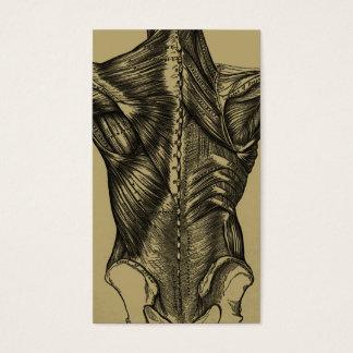 Tarjetas de visita traseras de la anatomía del
